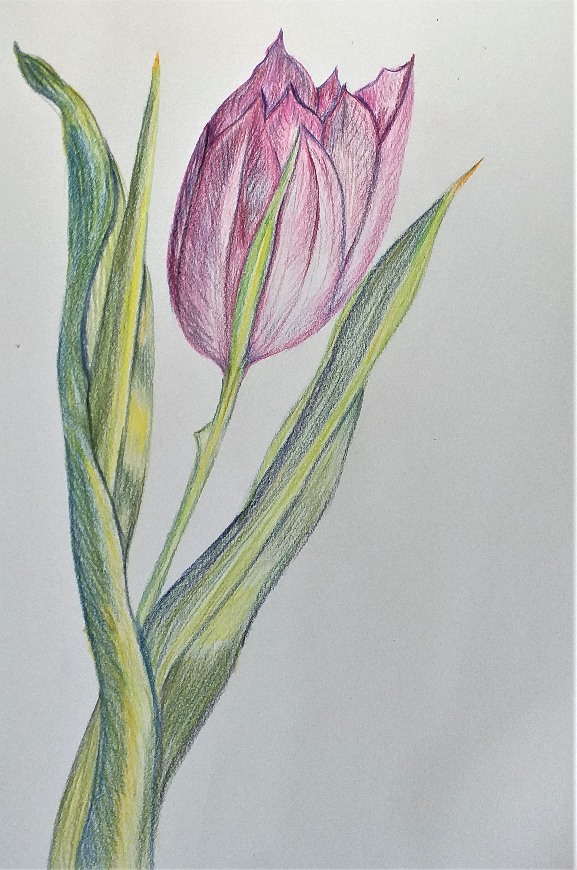Learn how to draw at Art classes in Worcestershire