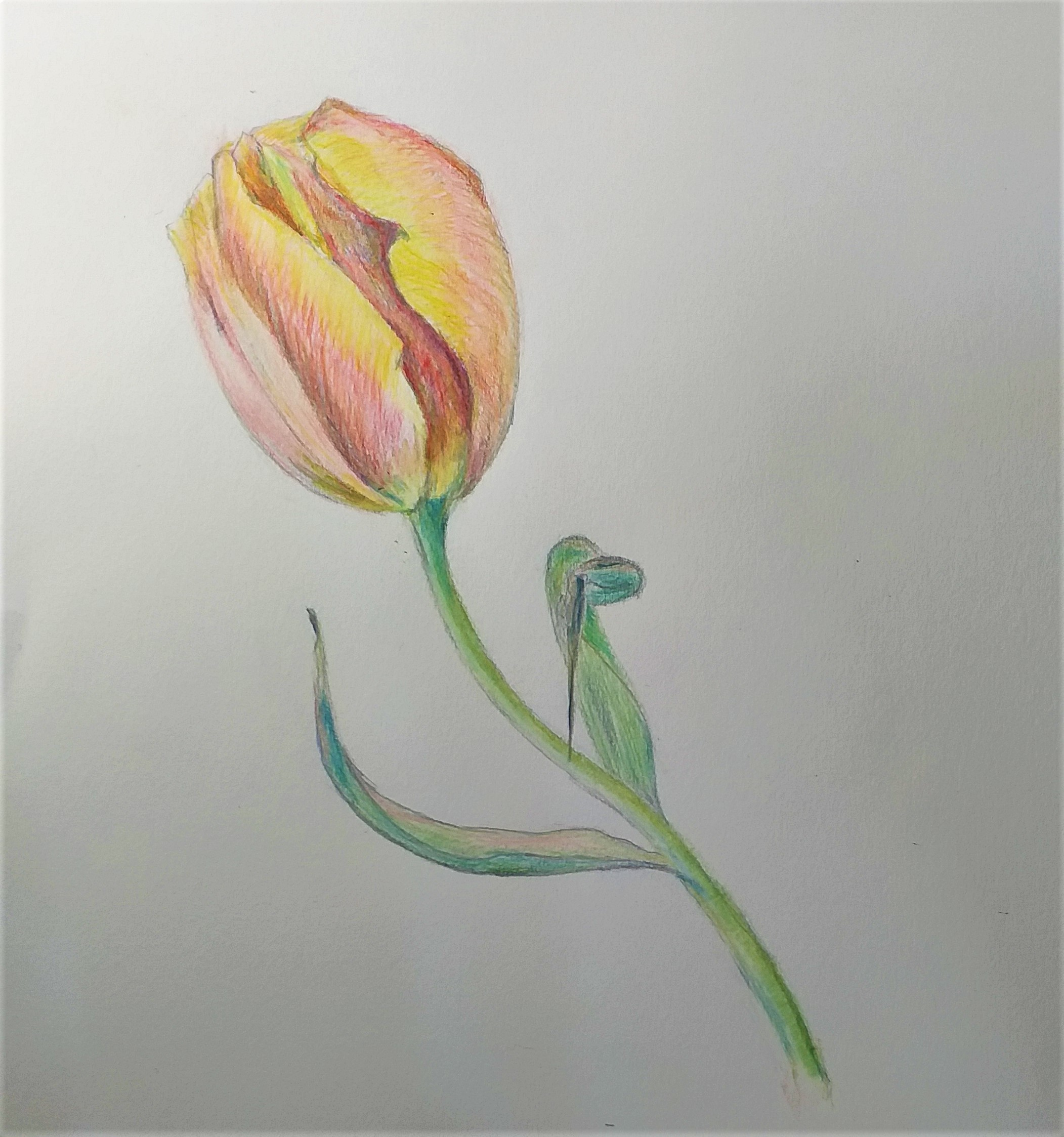 learn how to draw with coloured pencils at art classes in Worcestershire