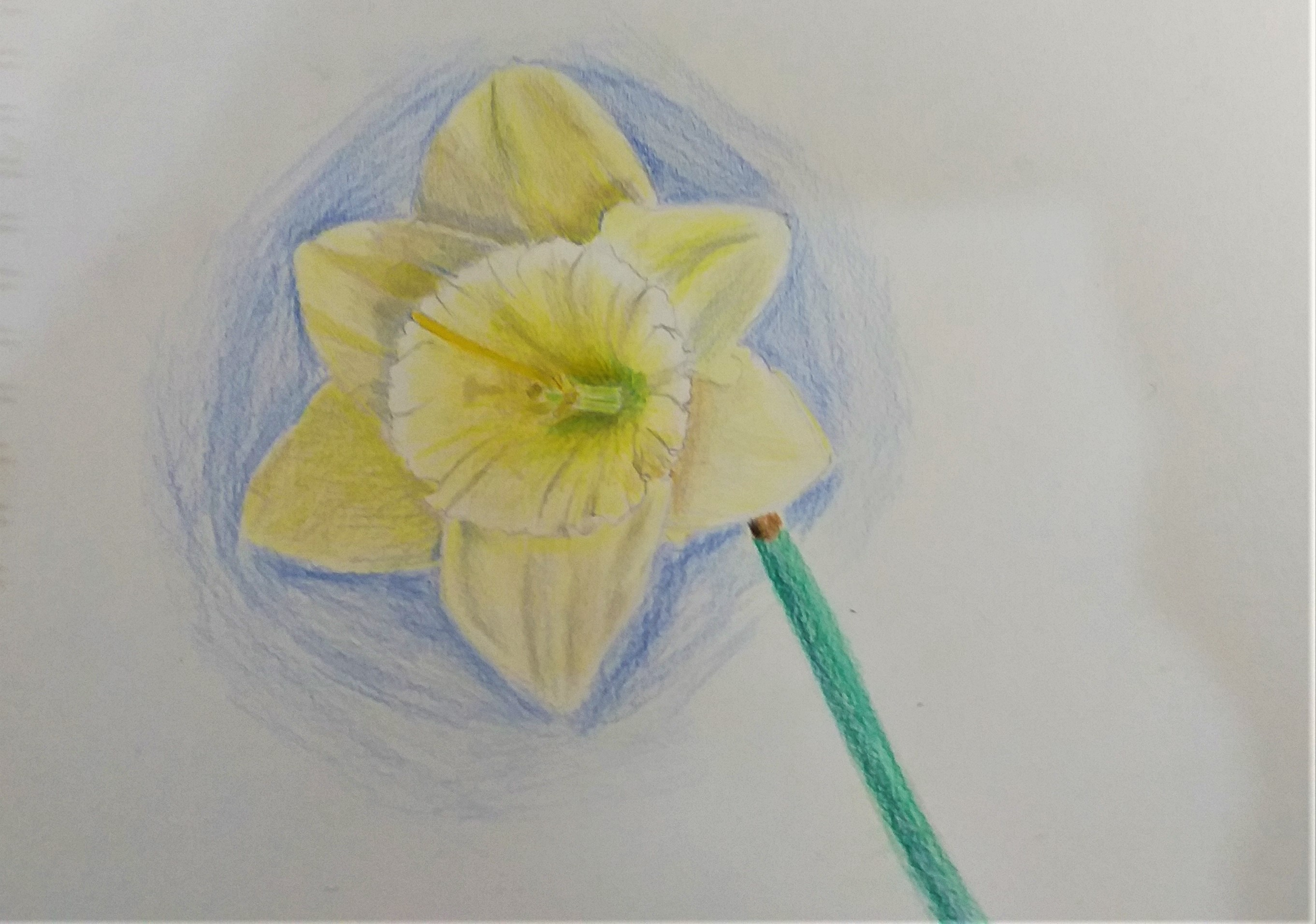 learn how to use coloured pencils at art classes in Worcestershire