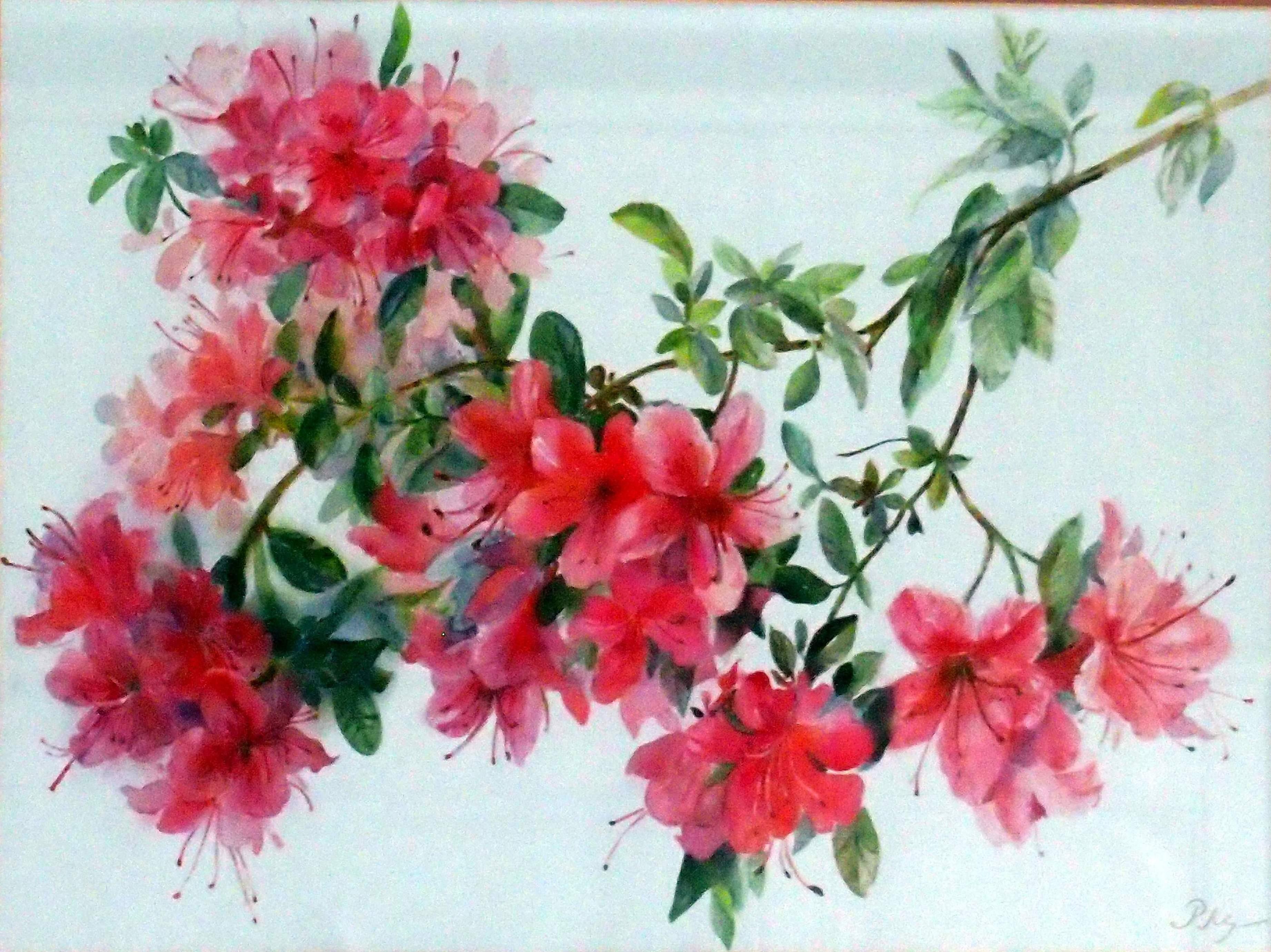 Copy of Flowering azelea 44x54cm